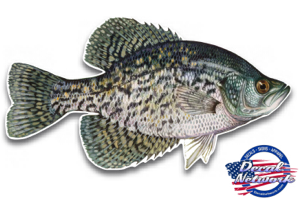 Black crappie fish decal